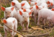 проблемы животноводства